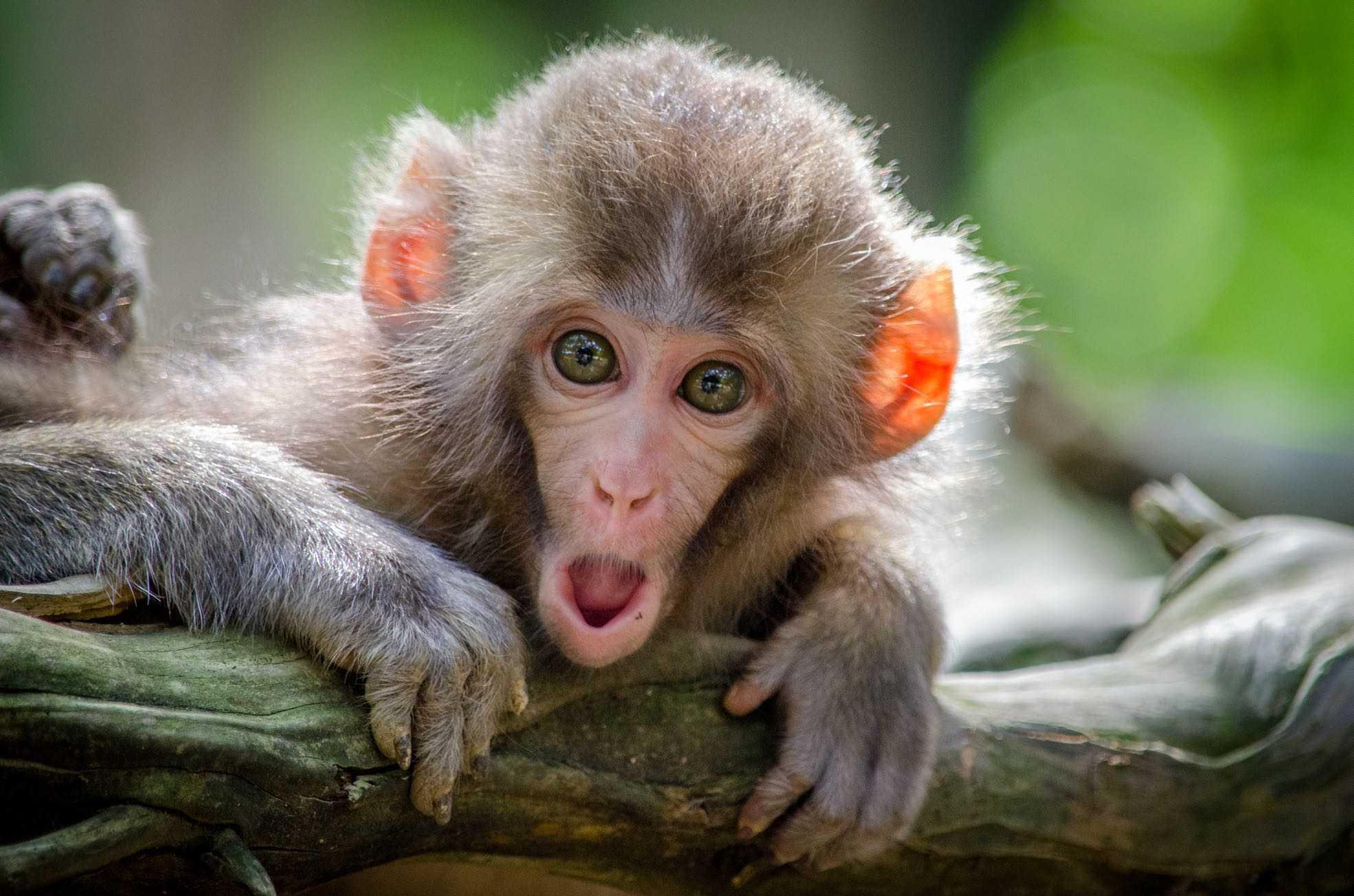 """""""Affe"""" ist zB eine Beleidigung, die zu einer Anzeige führen kann"""